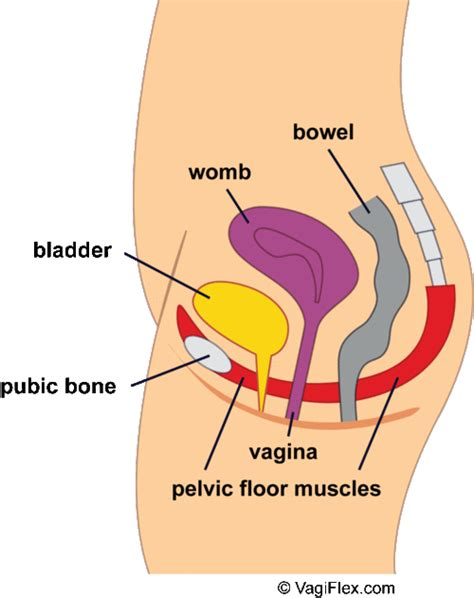 Vaginal cramps 15 causes for women who are and arent gif 500x631